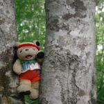 カヤノ平高原ハイキング【静かなブナ林で納涼森林浴】